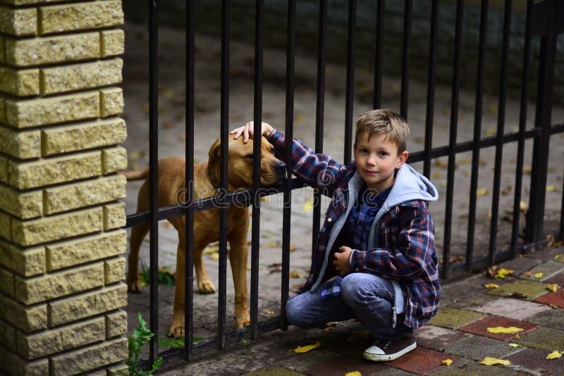 Geniet van zijnd mijn huisdierenhond Weinig jongen keurt huisdierenhond van dierenschuilplaats goed Weinig jongensspel met huisdi royalty-vrije stock foto
