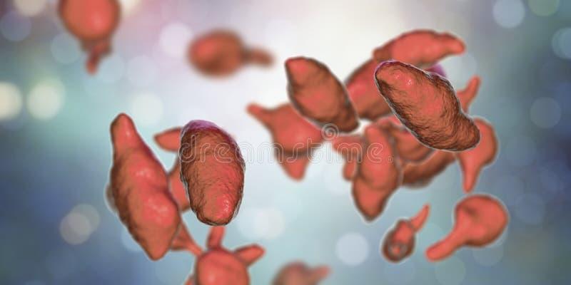 Genitalium de mycoplasma de bactéries illustration de vecteur
