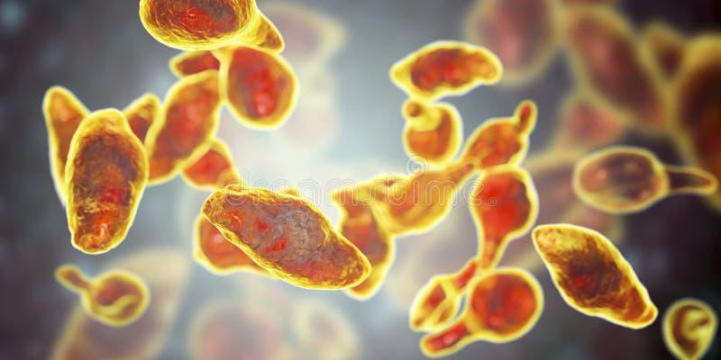 Genitalium del micoplasma de las bacterias ilustración del vector