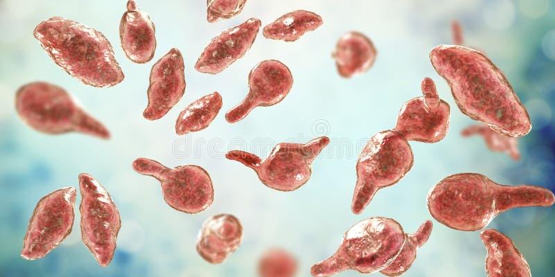 Genitalium do Mycoplasma das bactérias ilustração do vetor