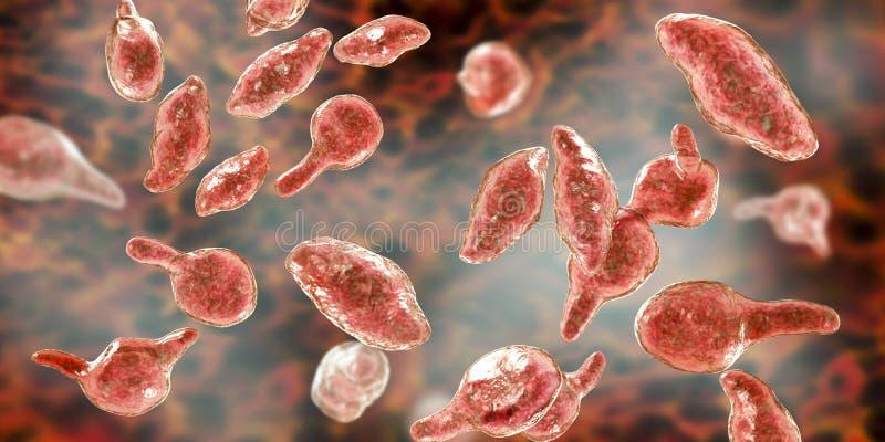 Genitalium do Mycoplasma das bactérias ilustração royalty free