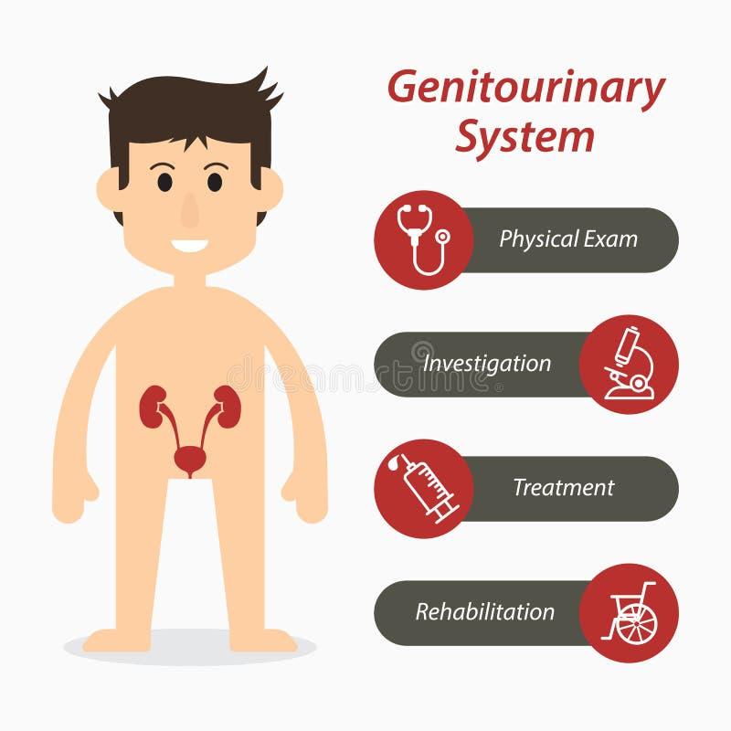 Genitourinary system och medicinsk linje symbol & x28; plan design & x29; stock illustrationer