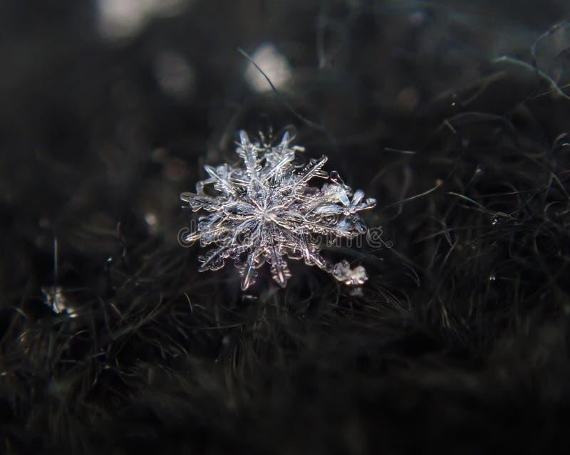 gennaio 12 rari - fiocchi di neve parteggiati immagini stock libere da diritti