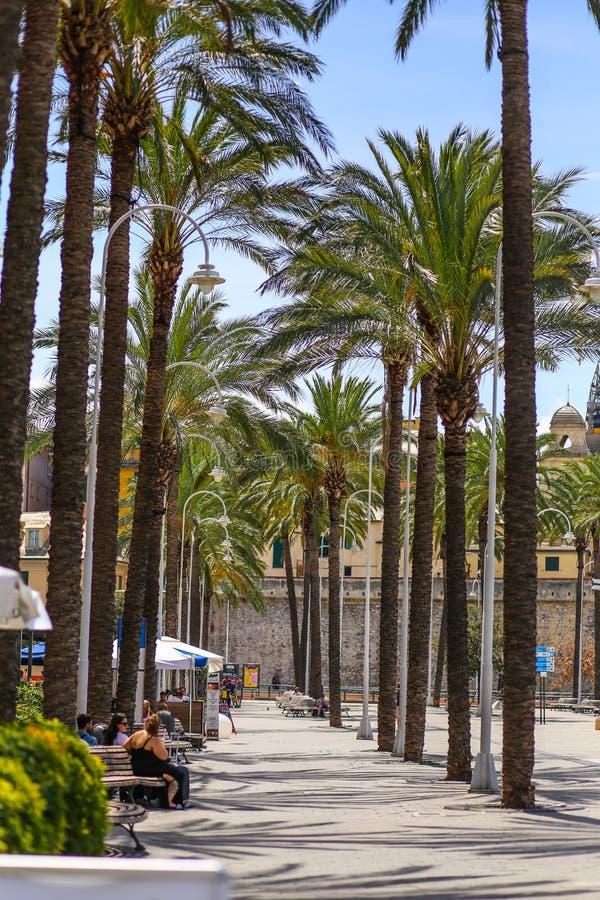 Genoa Genova - vicolo di camminata con le palme alte nel vecchio porto fotografie stock libere da diritti