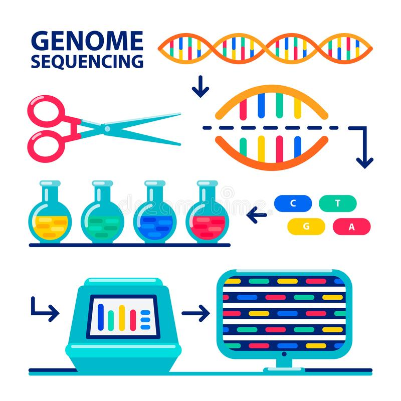 Genom uporządkowywa sheme Ludzkiego genomu projekt Mieszkanie stylowa wektorowa ilustracja royalty ilustracja