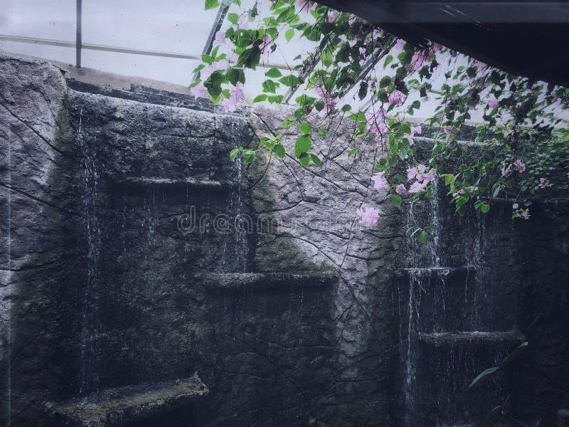 Genomblött vatten och blommor royaltyfri foto