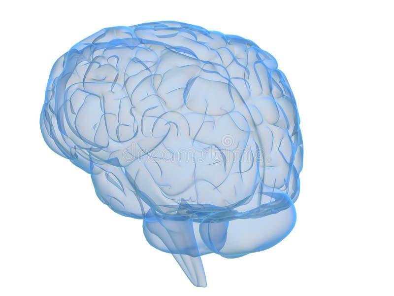 genomskinlig hjärna stock illustrationer