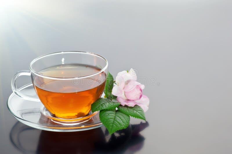 Genomskinlig kopp med grönt te och den nya växt- buketten royaltyfri fotografi