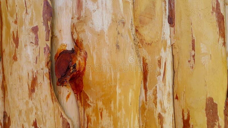 Genomskinlig lackad trätextur, tränatur för staketpaneler nästan arkivbilder