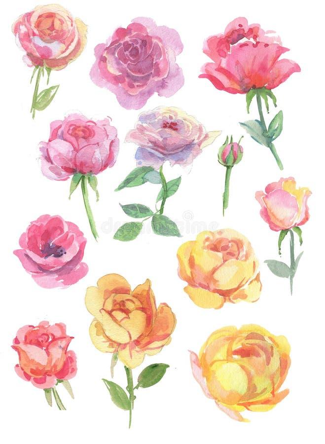 Genomskinliga sommarblommor för vattenfärg, rosor för affischer, vykort, baner och designer vektor illustrationer