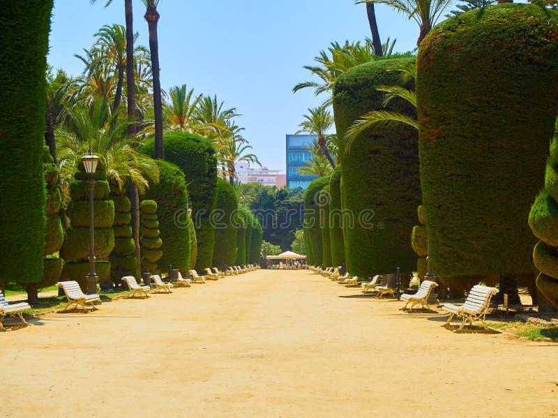 Genoves parkerar, botaniska trädgården av Cadiz, Spanien royaltyfri bild