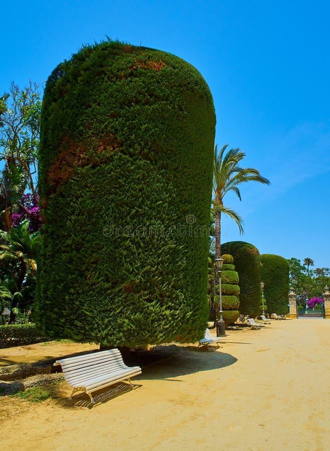Genoves parkerar, botaniska trädgården av Cadiz, Spanien royaltyfri fotografi