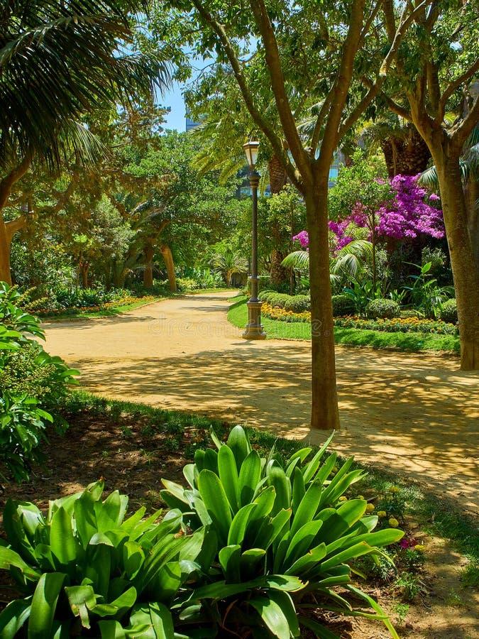 Genoves parkerar, botaniska trädgården av Cadiz, Spanien royaltyfria bilder