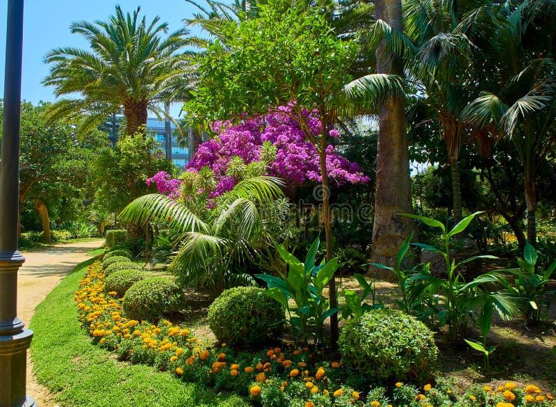 Genoves parkerar, botaniska trädgården av Cadiz, Spanien arkivfoton