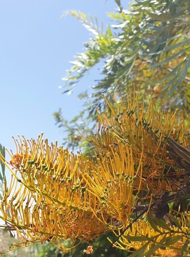 Genre d'arbres d'estropié photo stock