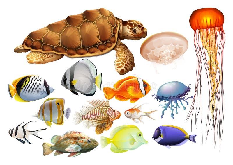 Genre différent d'animaux de mer illustration de vecteur