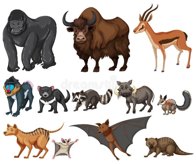 Genre différent d'animaux sauvages sur le blanc illustration libre de droits
