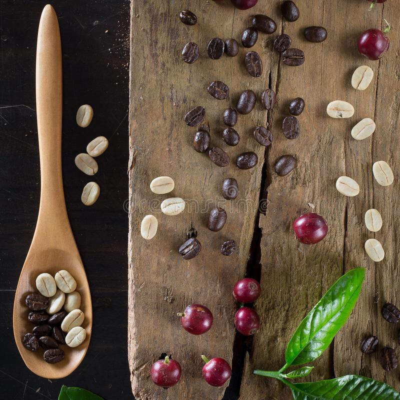 Genre différent de grains de café frais et de WI rôtis de grains de café image stock