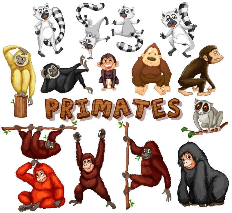 Genre différent de primats illustration stock
