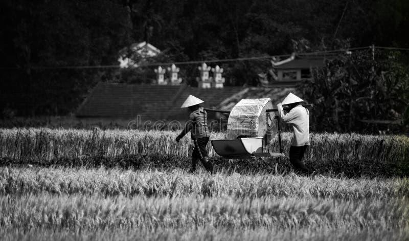 Gens asiatiques travaillants image libre de droits