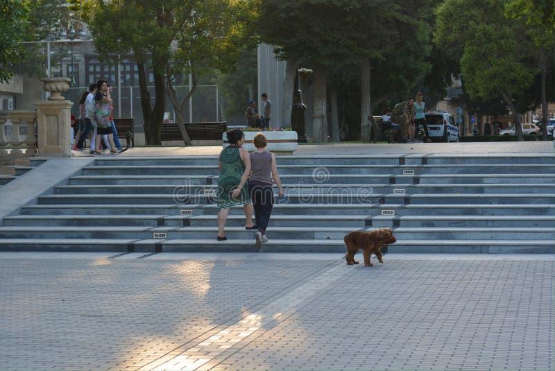 Download Gente Di Camminata Con Il Cane In Parco, Bacu Immagine Stock Editoriale - Immagine di cityscape, grande: 55360599