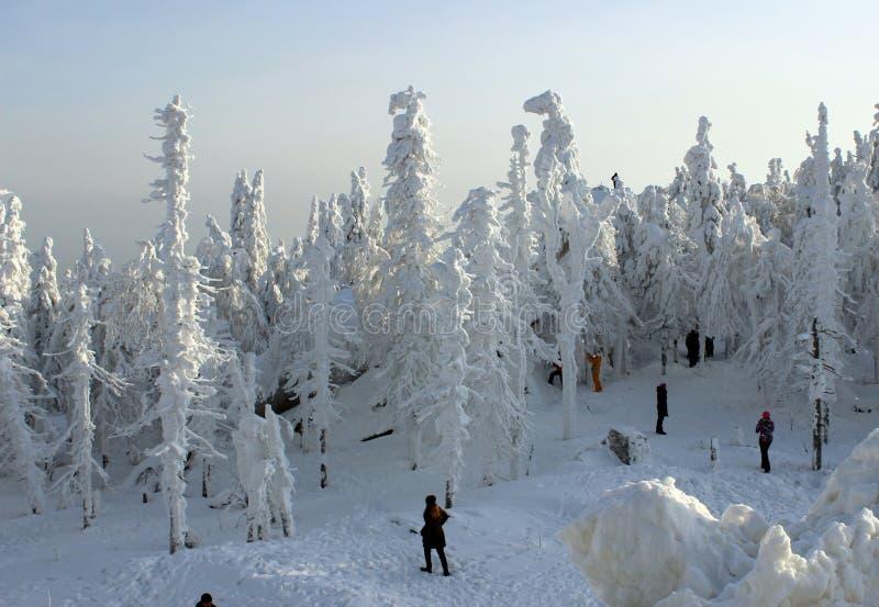 Gente en bosque del invierno fotografía de archivo
