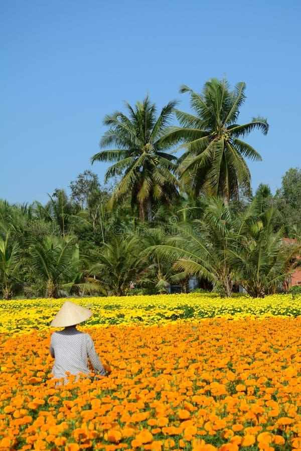 Gente en el delta del Mekong, Vietnam imágenes de archivo libres de regalías