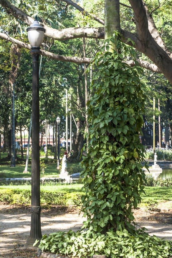 Gente en Luz Public Park en los centros de la ciudad Sao Paulo Éste es el primer parque público de la ciudad fotos de archivo