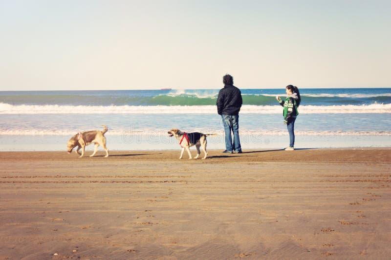 Gente en perros que caminan de la playa fotos de archivo