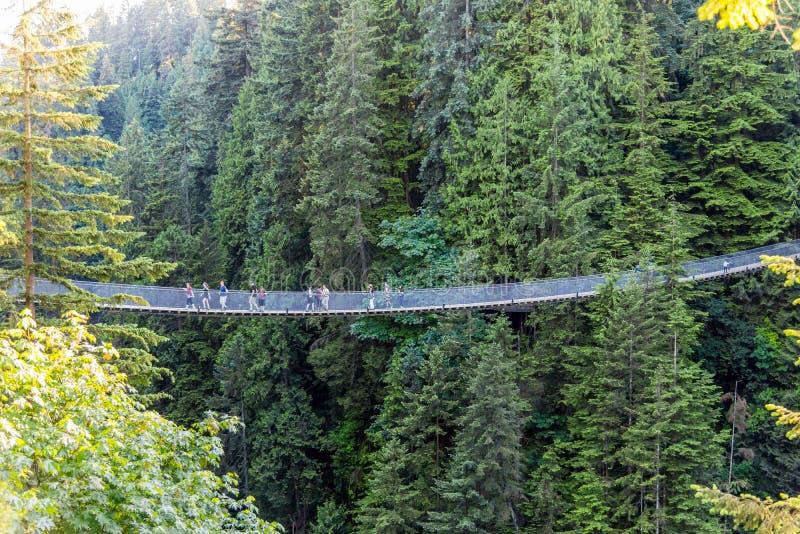 Gente en puente colgante de Capilano entre árboles foto de archivo
