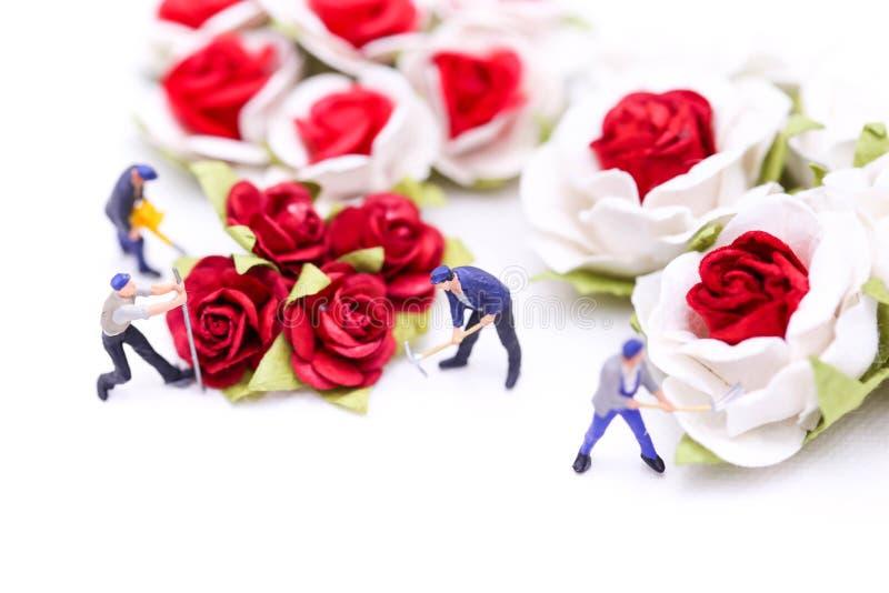 Gente miniatura: Combine al trabajador con las rosas rojas y las rosas blancas encendido foto de archivo libre de regalías