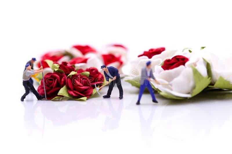 Gente miniatura: Combine al trabajador con las rosas rojas y las rosas blancas encendido fotos de archivo