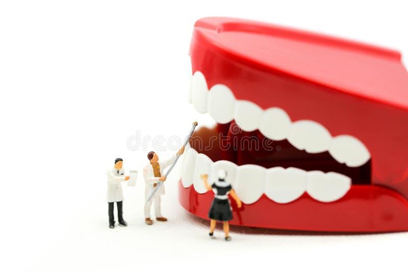 Gente miniatura: dente pulito o modello dentario con il dentista che esamina i denti di un paziente, facendo uso per del concetto immagine stock libera da diritti
