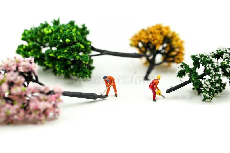 Gente miniatura: trabajador que usa una motosierra para reducir un árbol de haya grande, concepto de la tala de árboles foto de archivo