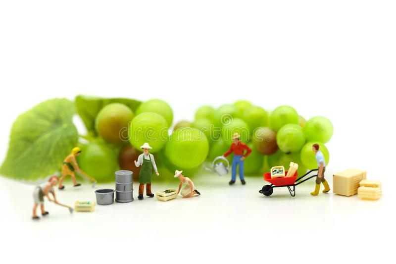 Gente miniatura: trabajo del granjero del equipo con agricultu del concepto de la fruta foto de archivo