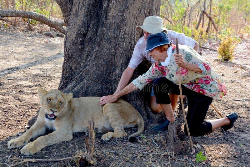 Gente que camina con los leones foto de archivo libre de regalías