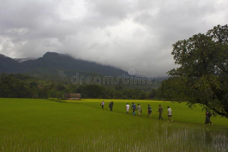 Gente que camina en el campo, Sharavathi, Karnataka, la India imagen de archivo