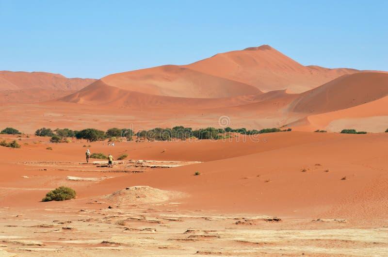 Gente que camina entre dunas grandes en el desierto de Namib, en Sossu fotos de archivo libres de regalías