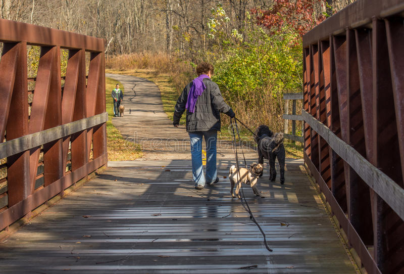 Gente que camina sus perros fotos de archivo libres de regalías