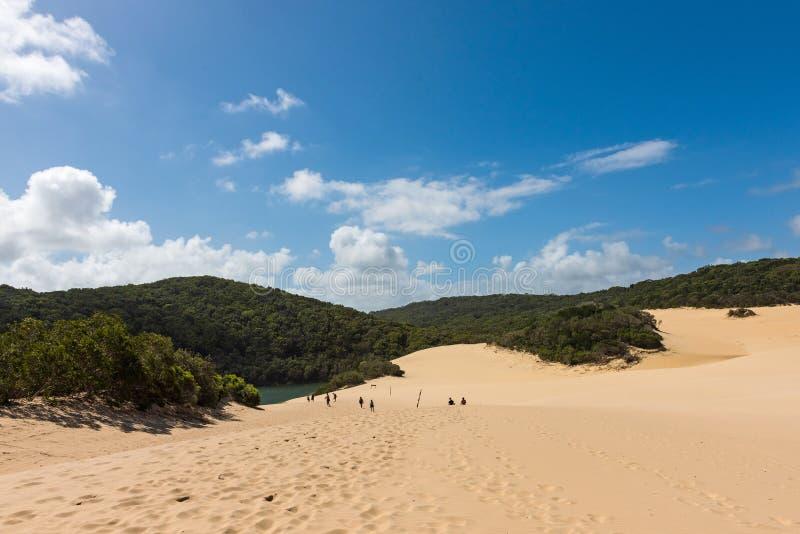 Gente que camina a través de las dunas de arena de Fraser Island para llegar al lago Wabby fotos de archivo