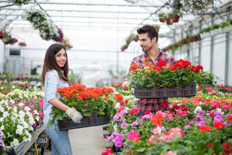 Gente que cultiva un huerto, florista que trabaja con las flores en invernadero fotografía de archivo