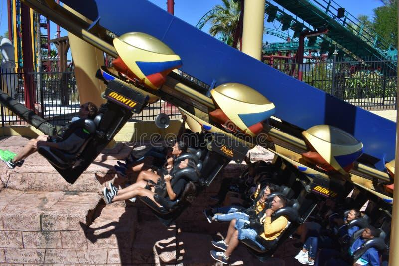Gente que goza del roller coaster de Montu, en una subida de 45 grados en los jardines Tampa Bay de Bush fotografía de archivo