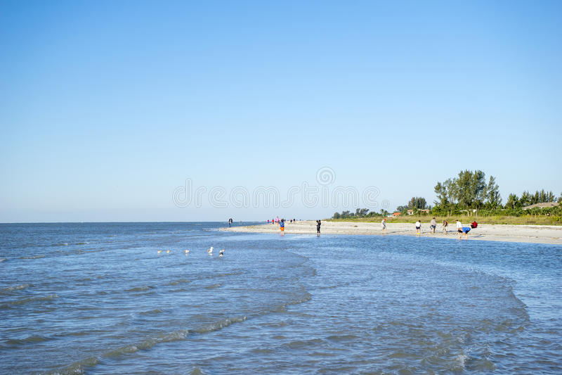 Gente que recoge conchas marinas en una playa #1 fotos de archivo libres de regalías