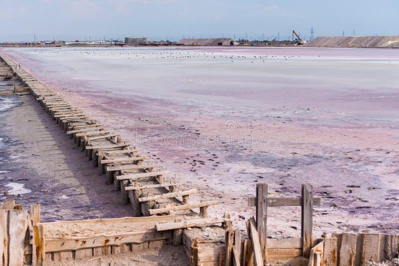 Gente que recolecta la sal del lago salado rosado Siwash, coloreada por las microalgas, famosas por propiedades antioxidantes, imagenes de archivo