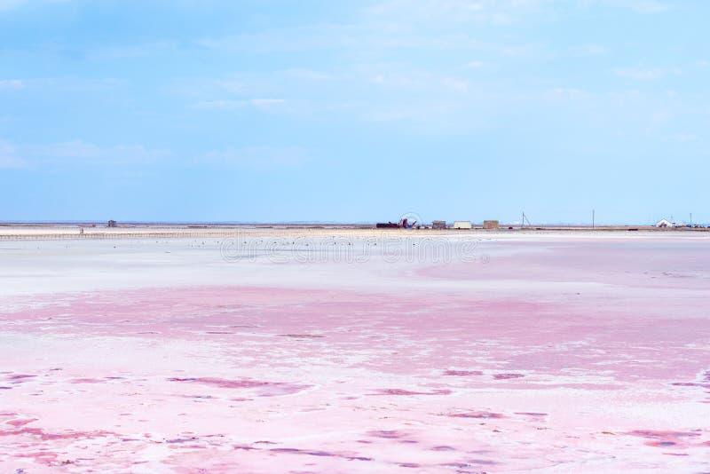 Gente que recolecta la sal del lago salado rosado Siwash, coloreada por las microalgas, famosas por propiedades antioxidantes, foto de archivo libre de regalías