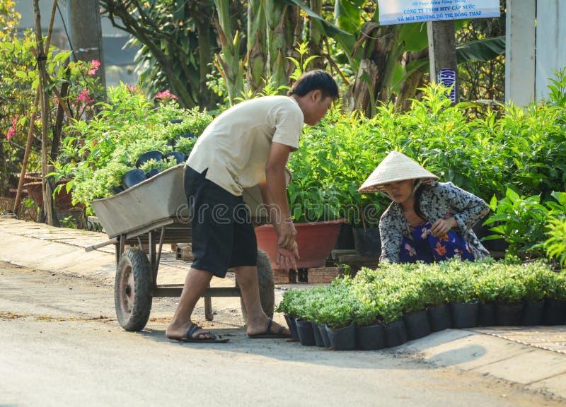Gente que trabaja en la plantación de la flor en Dong Thap, Vietnam fotografía de archivo