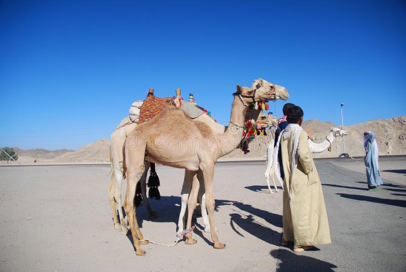 Gente y camellos fotos de archivo libres de regalías