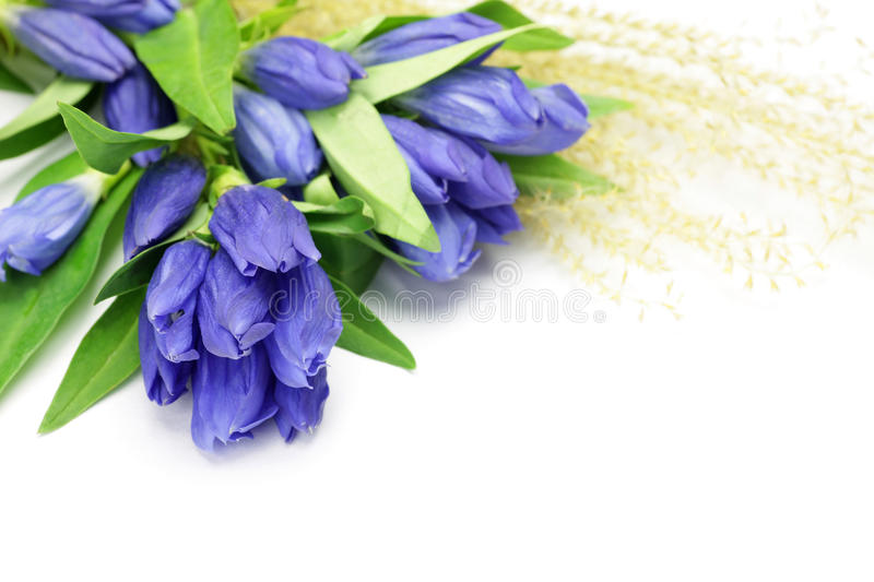 Gentian And Japanese Pampas Grass Stock Image