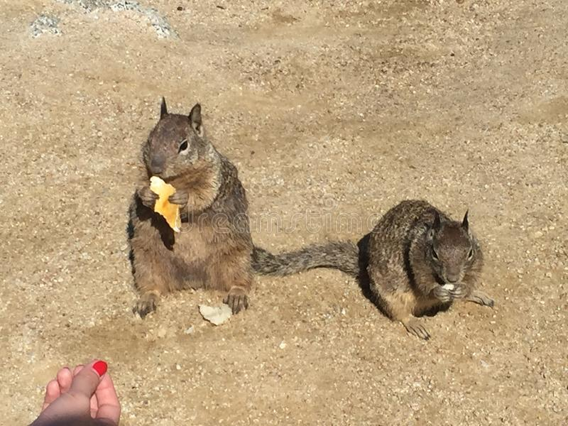 Gentillesse d'écureuil photo stock