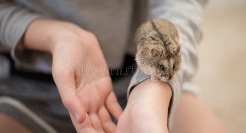 Gentillesse de hamster avec un enfant images libres de droits